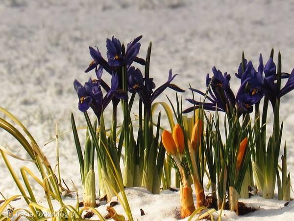 wiosna,,wiosna