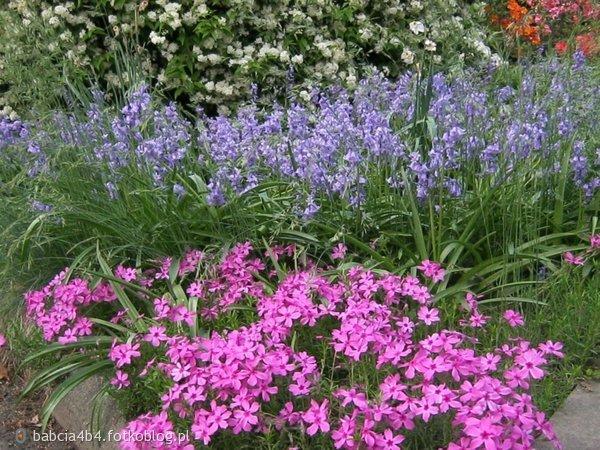 Kwiaty parkowe