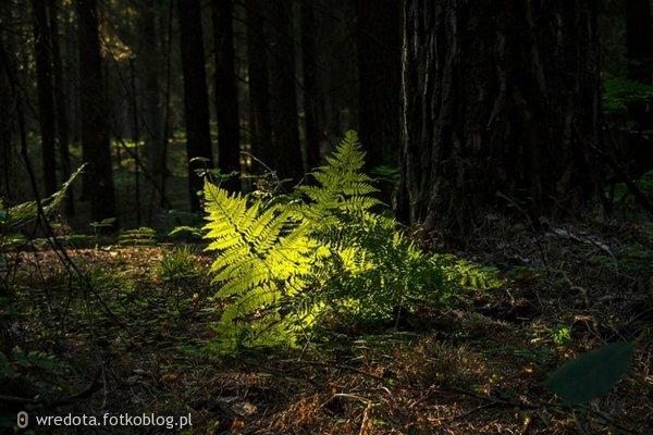 ..leśne opowieści -z mchu i paproci......