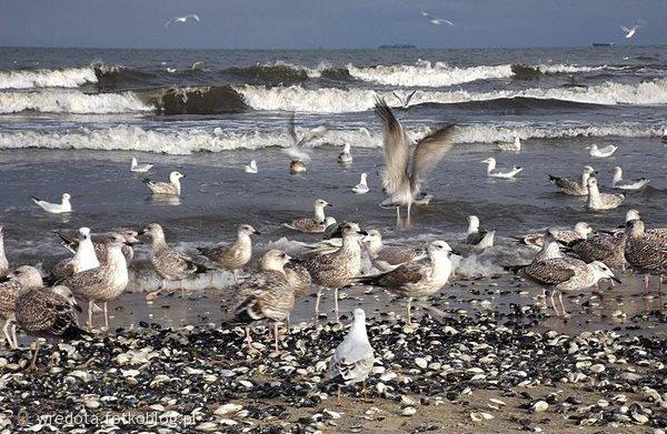 ..uczta na plaży....