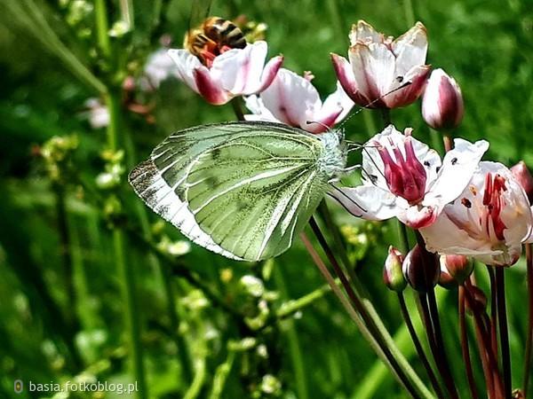 Nie trzeba anielskich skrzydeł, by oderwać się od ziemi, wystarczą motyle...