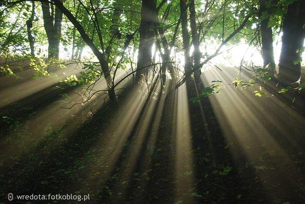 ...ktoś zagląda przez drzewa do lasu