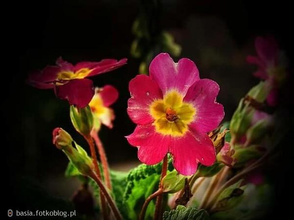 kwiaty..