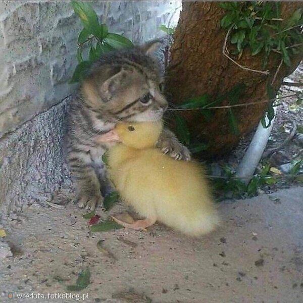 ..to jest przyjaźń......