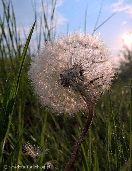 ..dmuchawce ,latawce , wiatr
