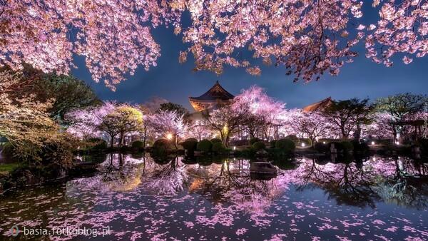 w japońskim ogrodzie...
