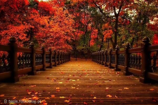 prawie jesień...