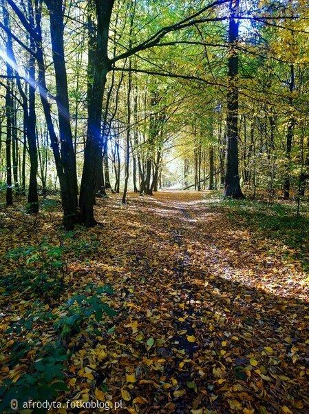 spacer i zaduma w listopadowy dzień