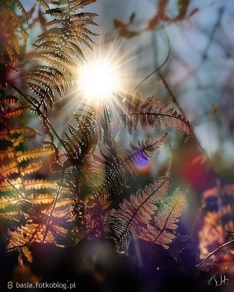 Natura..własnie na przekór...