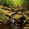 jesienna zaduma  ::