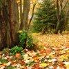 kolorowy jesienny dywan...  ::