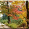 kolory jesieni  ::