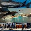 NAJMĄDRZEJSZE ZWIERZĄTKA NA ŚWIECIE.  ♥  :: Z Turcji. <3 Pokaz delfinów w Turkler, park Sealanya. ;3 słabo troche, eh..