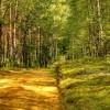 Idąc przez las  ::