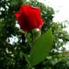 ..miłego poniedziałku....  :: ( róża przed moim oknem)   Warto spełniać swe marzenia, Zawsze warto iść do przodu N