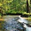 Rzeka Tanew w Suścu;)  ::