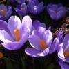..oraz namiastka wiosny  ::