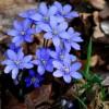 w kolorze blue..  :: Miłego i udanego weekendu życzę Wszystkim!