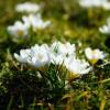 co piszczy w trawie?  ::
