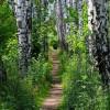 już pięknie wszystko zielone..  ::