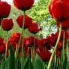 w świecie kwiatów..  ::