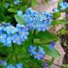 Szczęście, które posiadasz jest jak ziarno; szczęście, które dzielisz – to kwiat. ..  ::