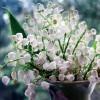 Białe konwalie- dzwoneczki małe...  ::