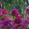 Żeby zobaczyć tęczę, trzeba najpierw przeżyć deszcz.  ...  ::