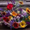 polne kwiatuszki...  ::