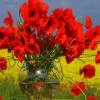 w Dniu Imienin..Pawle to dla Ciebie...  :: Niech te piękne maki przyniosą Ci dużo szczęścia..100 lat!!!