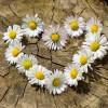 zabawa kwiatami..  ::