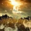 ..z powiewem wiatru..  ::