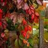 ...uroki jesieni..  ::