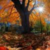w listopadowym słońcu...  :: Ostatnich liści zwiewny taniec  melancholijnie  kończy jesień,  drzewa znów chudsze.