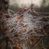 ..jesienna pajenczynka..  ::