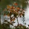 samotne drzewko..  :: W świecie, gdzie życie tak naturalnie łączy się z życiem, gdzie kwiat  nawet w powiewie wiatru