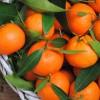 5) W zimie organizm potrzebuje dużo witaminy C. Więc życzę wszystkim smacznego 🍊  ::
