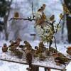 Bądź jak ptak, który, gdy siada na gałęzi zbyt kruchej, czuje, jak spada, lecz śpiewa dalej, bo wie, że ma skrzydła.    ::