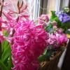 Łatwo chwalić kwiaty, lecz być kwiatem?    ::