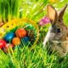 Wesołych Swiąt!!!  :: Wczoraj kury tak gdakały nasze jajka oszalały malowały się w paseczki i w kółeczka i
