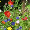 wśród kwiatów...  ::
