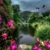 Kwiaty są pięknymi słowami i hieroglifami natury, którymi daje nam ona poznać, jak bardzo nas kocha...  ::