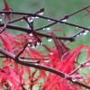 deszczowo..ech ta jesień..  ::
