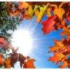 Jesień  :: *zdjęcie nie jest mojego autorstwa Listopad   Złote, żółte i czerwone opadają liści