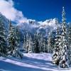 zimowe piękno...  ::
