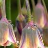 ..troszke kwiatów środku zimy...  ::