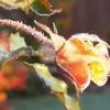 Kwiaty na to są, ażeby więdły, ale serca są, aby kochały.    ::