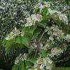 Kwiaty wiosny   ::