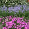 Kwiaty parkowe   ::
