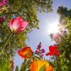 Maj to miesiąc zapachów...kolorów..śp<br />iewu ptaków i miłości...  ::